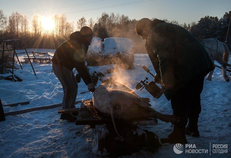 Обжигание туши свиньи газовой горелкой во дворе дома в селе Березовка Томской области