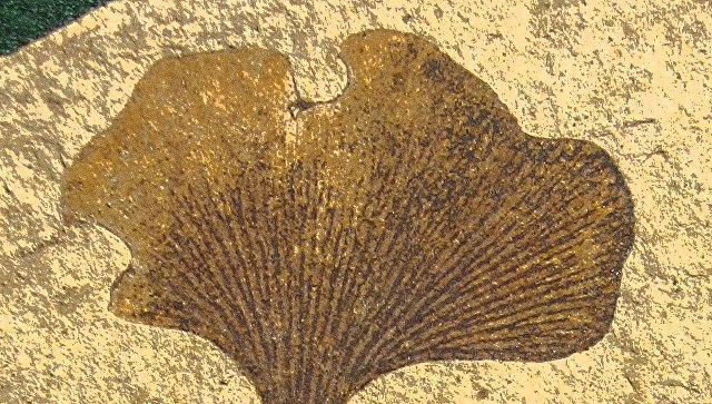 Ученые прочитали ДНК древнего растения наЗемле