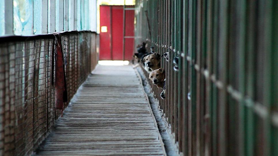Каждая собака (Москва)