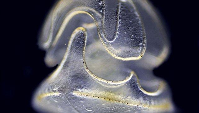 Животное, укоторого есть голова инет тела, нашли вТихом океане