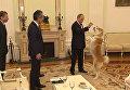 Путин показал японским журналистам собаку Юмэ
