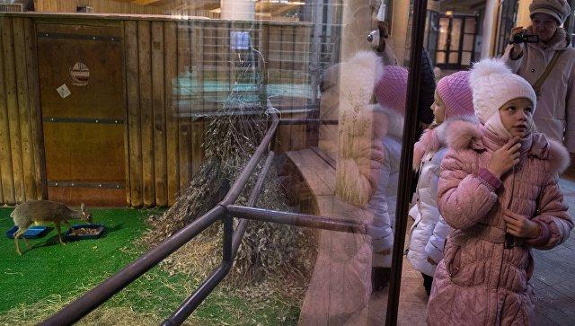 Веб-камеры появились ввольерах Московского зоопарка