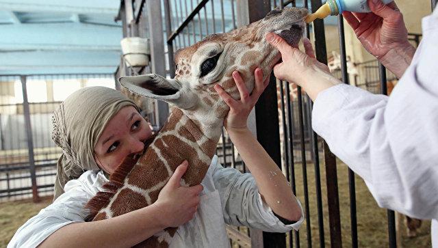 Иванов предложил усилить ответственность заиспользование животных вкоммерческих целях