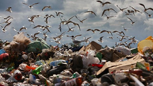 Полигон бытовых отходов. Архив