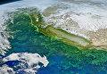 """Цветущий планктон, заполнивший Тихий океан """"кислотой зомби"""""""