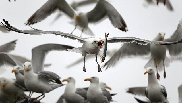 ВНью-Йорке уничтожено неменее 70 тыс. птиц ради безопасности людей