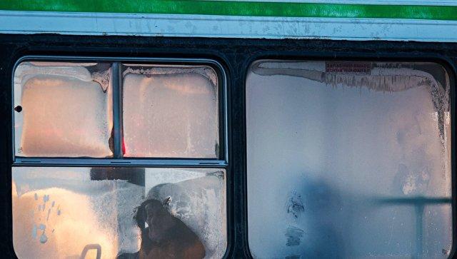 Окна автобуса. Архивное фото