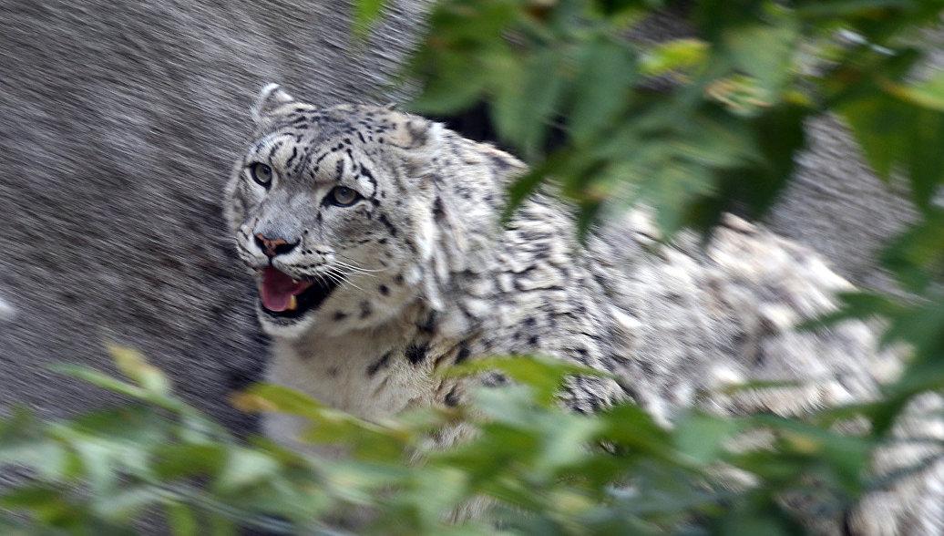 РФ и Монголия будут вместе контролировать миграцию редких животных