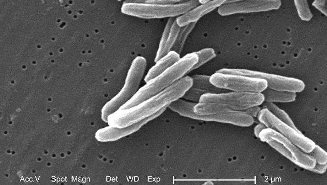 Возбудитель туберкулеза - бактерия Mycobacterium tuberculosis