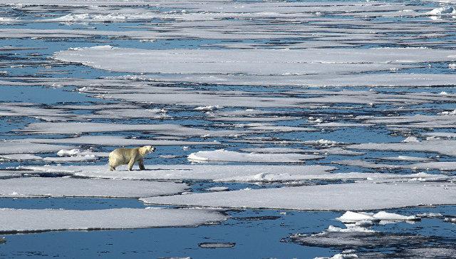 Русская Арктика. Архивное фото