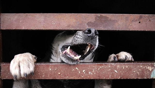 Лай собаки. Архивное фото