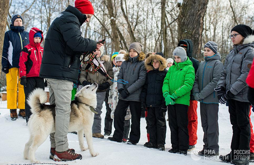 Дети на территории парка Сокольники во время общения с собаками породы хаски в рамках реабилитационной и образовательной программы По пути с хаски