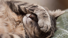 Спящий кот. Архивное фото