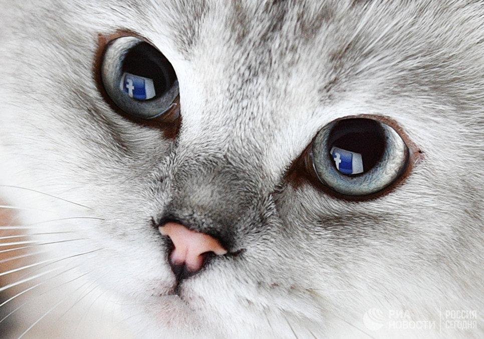 Отражение логотипа социальной сети Фейсбук в глазах кошки