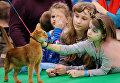 Дети гладят кошку породы абиссинская на международной выставке Кэтсбург 2017 в Москве