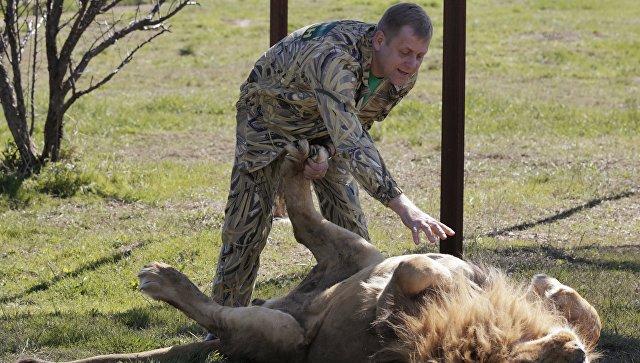 Директор крымского сафари-парка Тайган Олег Зубков гладит льва. Архивное фото