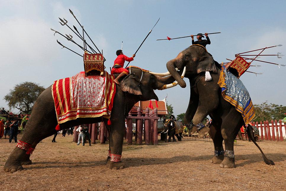 Во время национального праздника слонов Таиланда в древнем городе Аюттхая