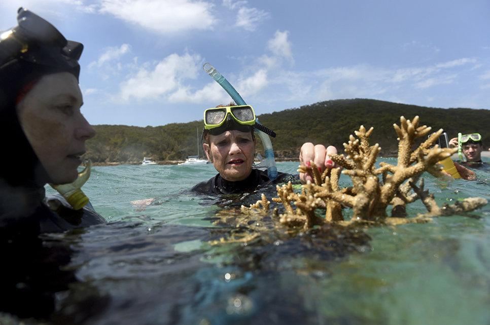 Австралийский политик Паулина Гансен и ученый Элисон Джонс на Большом Барьерном рифе