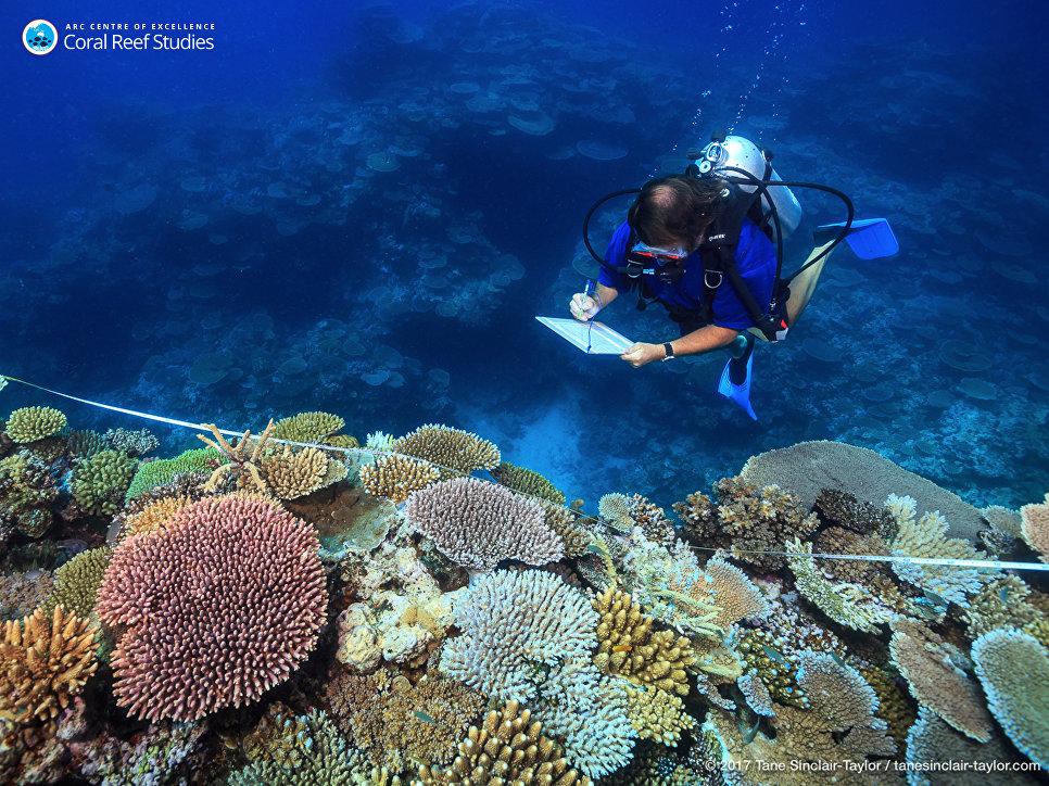 Ученый Эндрю Бейрд изучает здоровые кораллы на Большом барьерном рифе в Австралии
