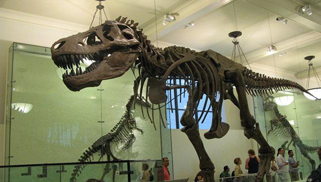 Скелет тираннозавра в Американском музее естествознания. Архивное фото