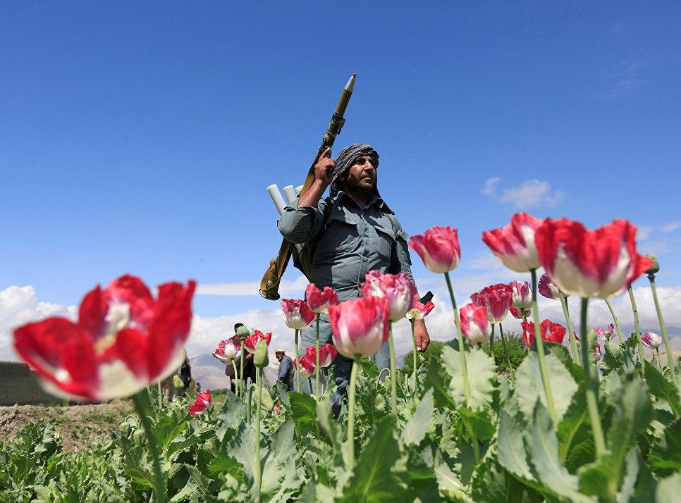 Афганский полицейский участвует в антинаркотической операции в провинции Джалалабад