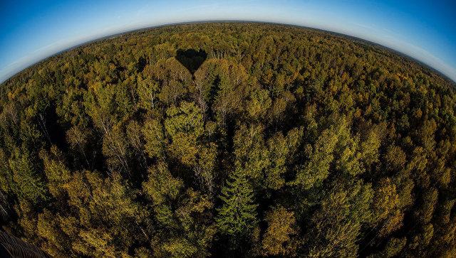 Костромская область признана лучшей по эффективности управления лесами