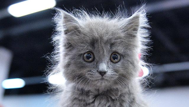 В Ирландии открылась вакансия обнимателя котов