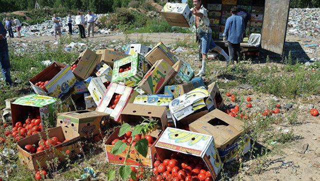 Уничтожение помидоров, задержанных на российско-белорусской границе. Архивное фото