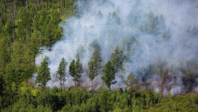 Половину лесных пожаров на далеком Востоке удалось потушить