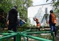 Работники коммунальных служб рубят ветки поваленных деревьев в одном из дворов Москвы