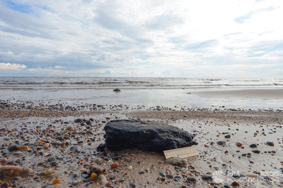 Мазутно-песчаный агрегат, образовавшийся вследствие разлива топлива в Онежском заливе и обнаруженный во время экспедиции по мониторингу морской экосистемы Белого моря