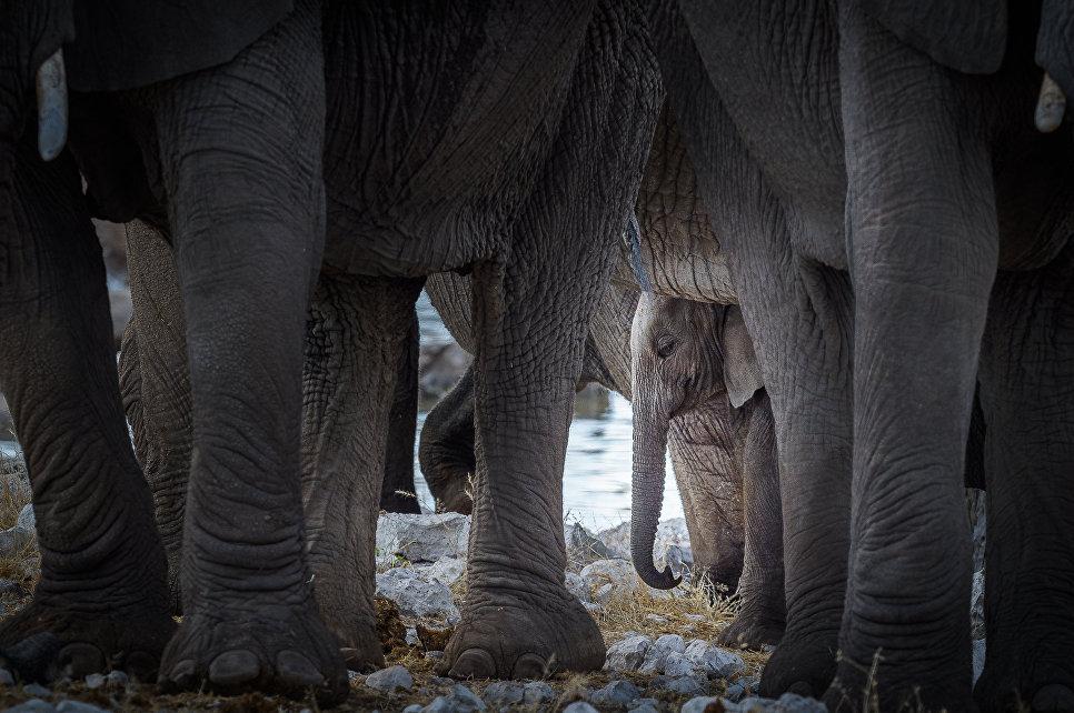 Работа фотографа Александра Власова Под защитой, занявшая первое место в категории Животные. Любители на ежегодном фотоконкурсе компании Nikon Я | В СЕРДЦЕ ИЗОБРАЖЕНИЯ