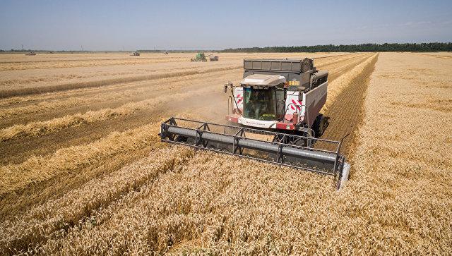 Турция ужесточила правила импорта российской сельхозпродукции