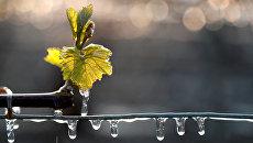 Виноградники, покрытые водой, которая была распылена для защиты их от мороза в Шабли, Франция. 28 апреля 2017
