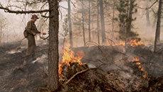 Тушение пожара в красноярской тайге. 3 августа 2017