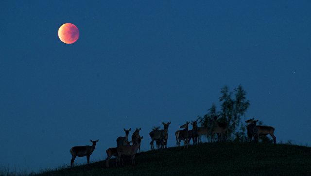 Кровавая Луна Скачать Через Торрент - фото 2