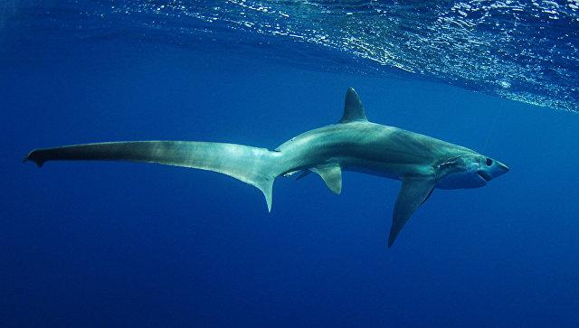 Врайоне Антальи рыболовы словили пятиметровую акулу