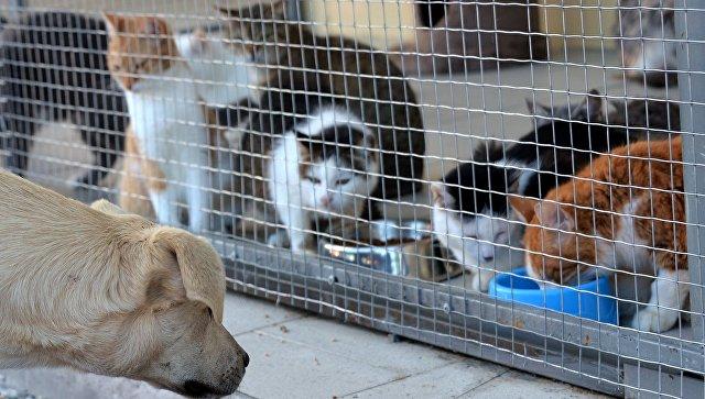 Калининградка украла 40 килограммов корма для собак и деньги из кассы