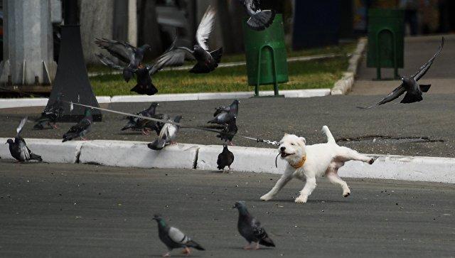 Собака на поводке. Архивное фото