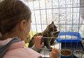 На фестивале прошла благотворительная выставка бездомных котят. Каждый желающий мог поиграть с кошками и при желании забрать к себе домой