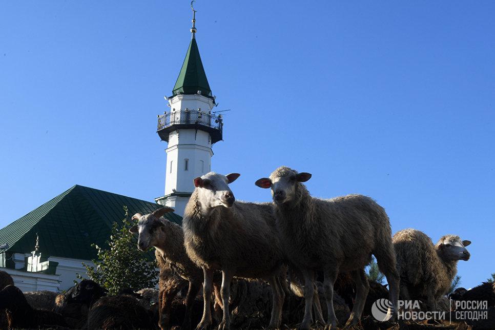 Жертвенные бараны у мечети Аль-Марджани в Казани в день праздника жертвоприношения Курбан-байрам. 1 сентября 2017