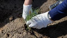 Губернатор Подмосковья пригласил жителей принять участие в акции Наш лес