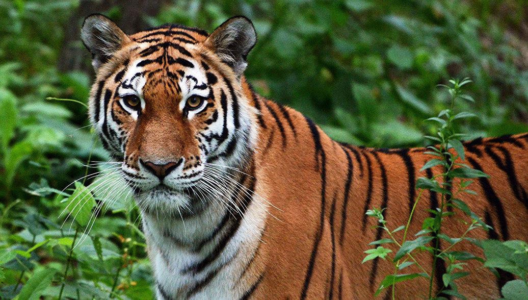 Минприроды представило проект по сохранению дикой природы России