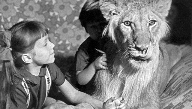 Лев, живущий в семье Берберовых