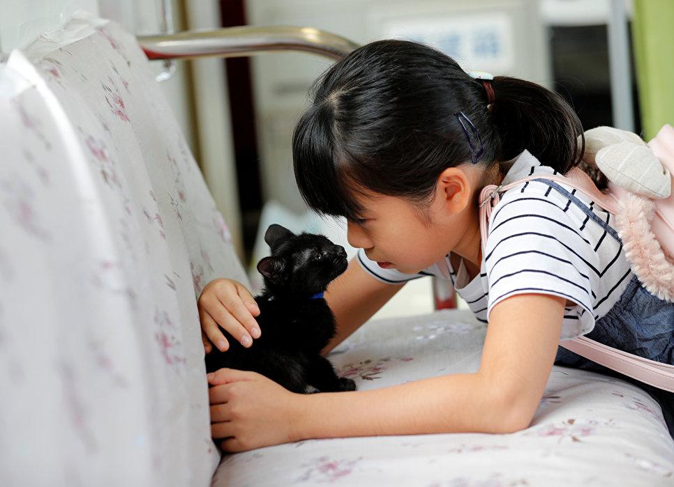 Девочка с котенком в котопоезде в городе Огаки, Гифу, Япония. 10 сентября 2017