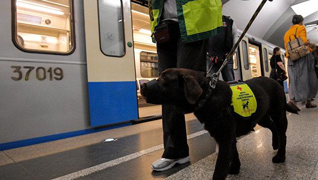 Кинолог с подопечным во время обучения собак-поводырей в Московском метрополитене. Архивное фото