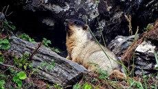 Редкий краснокнижный зверь обнаружен в Байкало-Ленском заповеднике