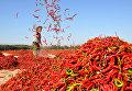 Мужчина раскидывает красный перец чили для просушки в Чжанъе, Китай