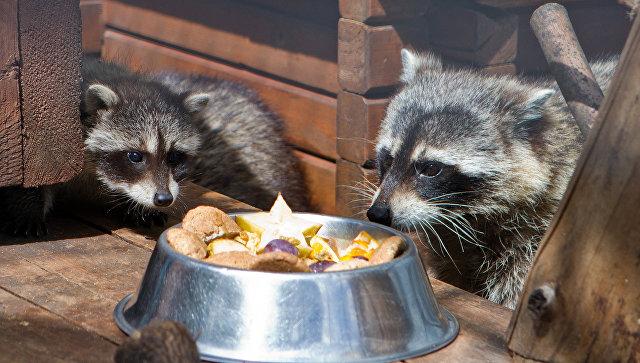 Пополнение в крупнейшем нижегородском зоопарке Лимпопо