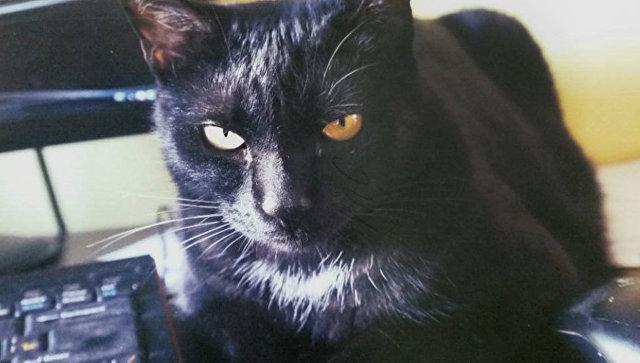 Черный кот новгород
